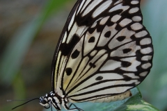 20090920 butterfly sniper