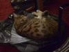 Nicole's kittie